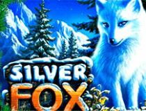 Играть без регистрации в Silver Fox
